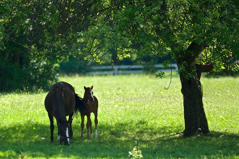 Ashwood Farm